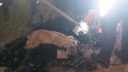 Ağrı'da zifte yapışan köpek, 2 saatte kurtarıldı