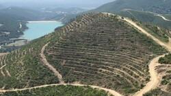 Adana'da 208 futbol sahası büyüklüğündeki alan, 5 ayda yeşillendirildi