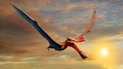Avustralya'da bulunan fosil, uçan dinozora ait çıktı