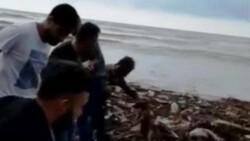 Sinop'ta selde mahsur kalan köpeği insan zinciri ile kurtardılar