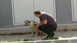 Tekirdağlı hayvansever Özay Kaya: Sokak hayvanına bu muameleme yapılamaz