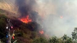Tekirdağ'da makilik alanda yangın çıktı