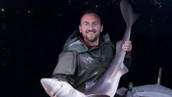 Trabzonlu balıkçının ağına köpek balığı takıldı