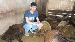 Erzurum'da 40 koyun telef oldu