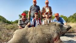 Bursa'da, tarlada 400 kiloluk domuzu vurdular