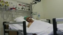 Afyonkarahisar'da koronavirüsü atlatan asırlık çınar