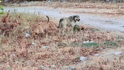 Antalya'da sokak köpekleri kediyi parçaladı