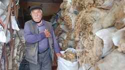 Eskişehir'de koyun yünleri artık talep edilmiyor
