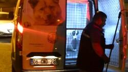 Sivas'ta sahipli köpek, polise ve bekçiye saldırdı