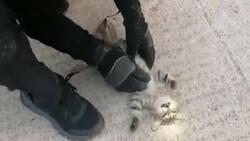 Kocaeli'de kalbi duran kedi masajla kurtarıldı