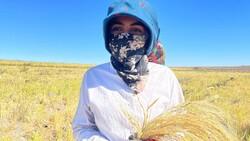 Şanlıurfa'da Karacadağ pirincinin zorlu hasadı