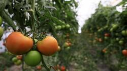 Antalya'da seradan markete 5 kilometrede yüzde 176 fiyat artışı