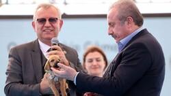 TBMM Başkanı Mustafa Şentop'a, sokak köpeği hediye edildi