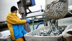 Fransa'ya İngiltere ile balıkçılık geriliminde 10 ülkeden destek