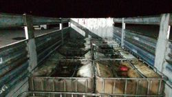 Niğde'deki oto lastik dükkanında 10 ton kaçak akaryakıt ele geçirildi
