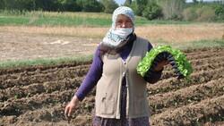 Kütahya'da köylüler, tarım arazilerinin 'sanayileştirilmesini' istemiyor