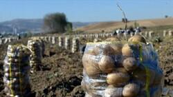 Tokat'ın Artova ilçesinde devletin desteklediği patateste üretim arttı
