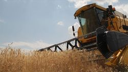 TMO: Yeni sezona kadar ekmeklik buğday stoku yeterli