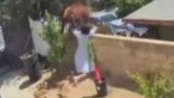 ABD'de bir kadın köpeklerini kurtarmak için ayıyı iteledi