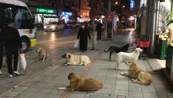 Bursa'da sokak köpekleri tehlike saçıyor