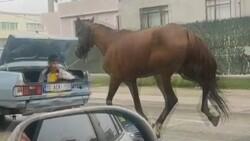 Bursa'da bir aracın bagajında oturan çocuk, seyir halindeyken bir atı peşinden sürükledi