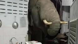 Tayland'da acıkan fil evin duvarını yıktı