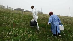 Karadeniz'de aşı mesaisi: Sağlık çalışanları 1800 metreye çıktı