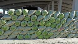 Afyonkarahisar'da fasulye fiyatları üreticiyi ve esnafı mutlu etti