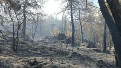 Çine'de yanan alanlar görüntülendi
