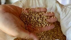 Eskişehir'de köy köy ata tohumlarının izi sürülüyor