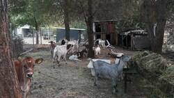 Marmaris'te yangından etkilenen hayvanlar bakımevine alındı