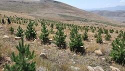 Erzurum'un çorak toprakları fidanlarla vahaya dönüştü