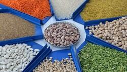 Hububat, bakliyat ve yağlı tohumlarda ihracat 8 milyar doları geçti