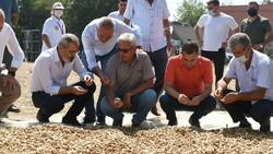 Tarsus'ta Ayşehanım fıstığı hasat şöleni sürüyor
