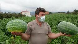 Trabzon'un Yalıncak karpuzu tarlada çürüdü