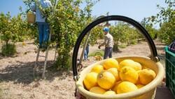 Taze meyve sebze sektörüne iki destek geldi