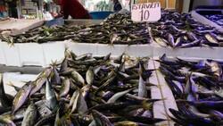 Karadeniz'de son 10 yılın istavrit bolluğu yaşanıyor