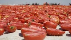 Konya'nın kurutulmuş domatesleri İtalya'da makarna sosu oluyor