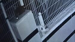 Antalya'da bahçe teline sıkışan yavru kedi, 9 saat sonra kurtarıldı