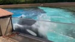 ABD'de parkta tutulan balinanın serbest kalması isteniyor