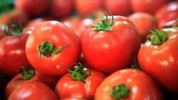 Türkiye'nin 2021 meyve sebze ihracatının şampiyonu kiraz ve domates