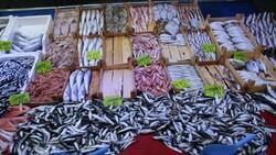 Bilecik'te halk balık tezgahlarına koştu: Palamut yok denecek kadar az