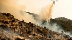 Kaliforniya'daki yangınlarda dünyanın en büyük ağaçları tehdit altında