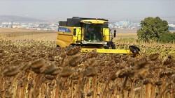 Tekirdağ'da yerli ayçiçeği tohumuyla yetiştirilen ürünler hasat edildi