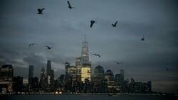 New York'taki gökdelenler uçan kuşlara engel oluyor
