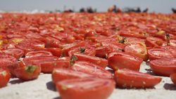 Kuru domates ihracatı 8 ayda 62 milyon dolara ulaştı