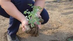 Antalya'nın Aksu ilçesinde seralarda kışlık domates ve biber ekimi başladı