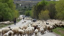 Erzincan'da yaylaya çıkan göçerler geri dönüş yolculuğuna geçti