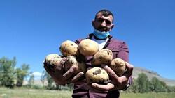 Pasinler Ovası'nda patateste kuraklığa rağmen rekolte arttı