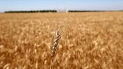 Tahıl ürünlerinde biyoçeşitlilik hedefleniyor